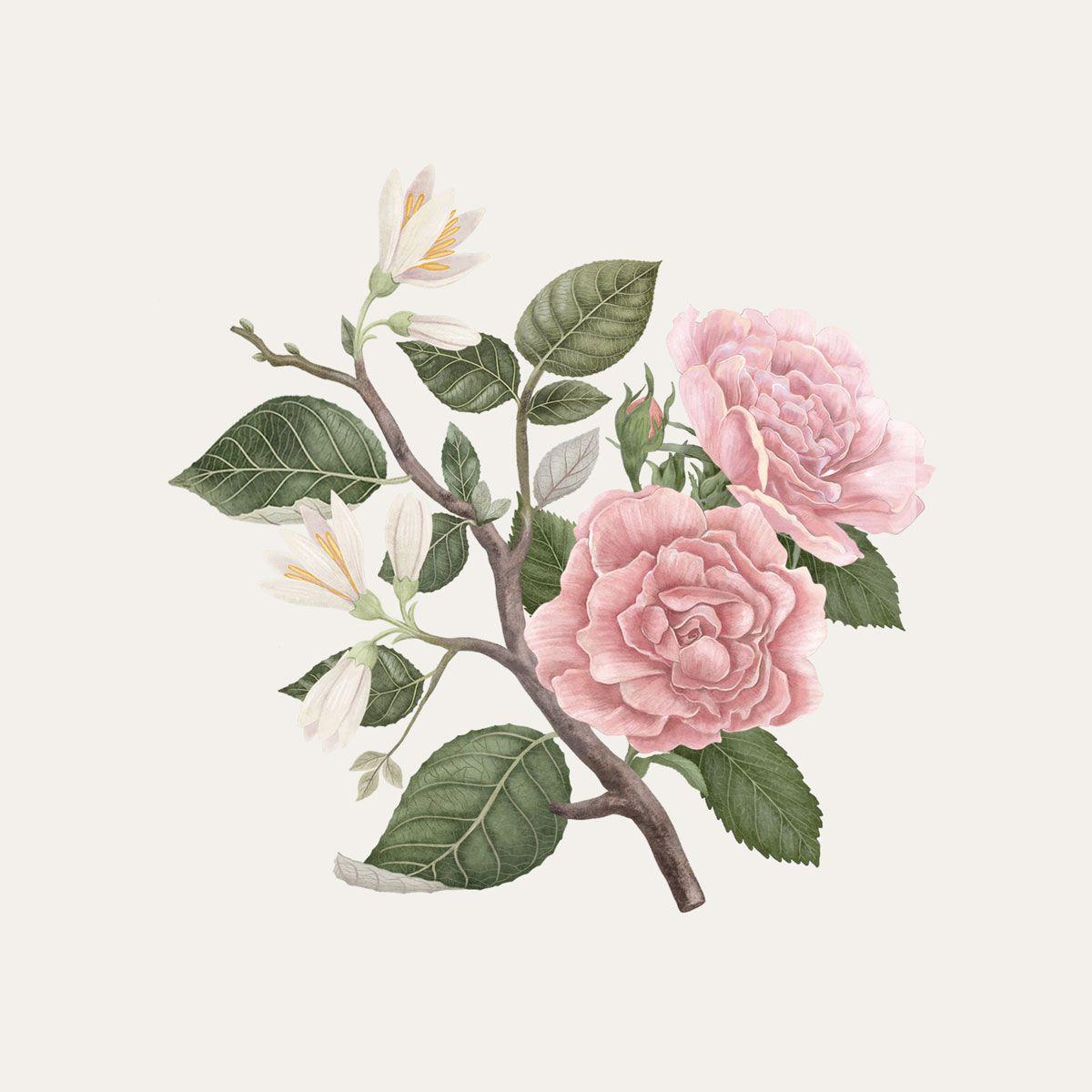 Benjoin et Rose