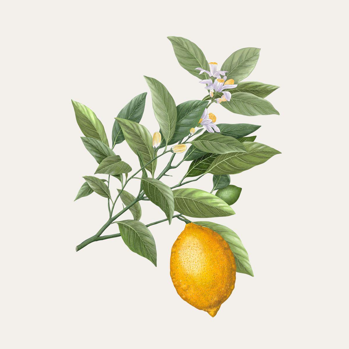 Siracusa Lemon
